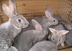 Чем кормить кроликов?